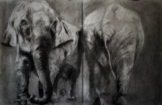 Study of Elephants